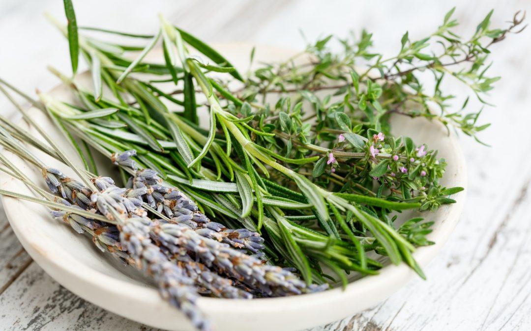 Découverte des plantes aromatiques et médicinales puis transformation